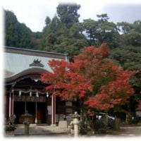 紅葉だより(^^♪1300年の歴史を誇る島本町「若山神社」の紅葉