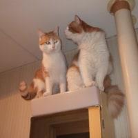 【猫と帰国・余談】猫マイクロチップにまつわるエトセトラ・・・