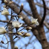 徳仙丈山の春