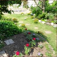 KUMA花壇に赤いジニアを