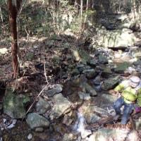 2017.3.4:いばらの道を歩く江ノ藤山から灰が峰
