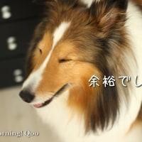 褒めれば伸びる子(..、)ヾ(^^ )ヨシヨシ