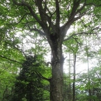 木の名前が何種類覚えられるか?