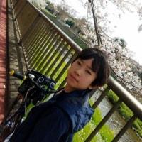 桜…そして迷子☆