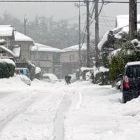 大雪も峠を越えました
