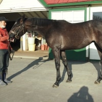 2歳馬 オーラフォ