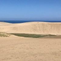 砂丘とうさぎ