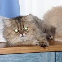 ニャン太とレモンの写真
