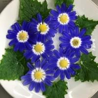 青い花 Blue flowers