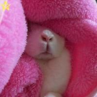 No.2236☆ゆきたん☆ブラッシング前のお顔&さつま芋はどこ?(動画あり)