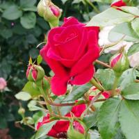 植物園の花 (2)