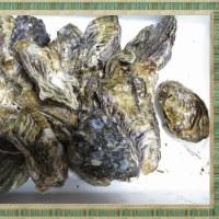 牡蠣の送り物