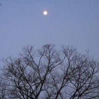 ヒバリ、理想の詩、登場人物