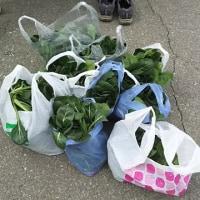 家庭菜園収獲配布