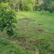 草刈の日々です。