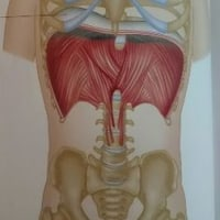 横隔膜呼吸で姿勢改善