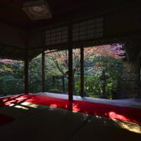 紅燃ゆる京都2016 桂春院