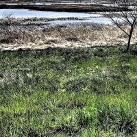 草青々と・芝川第一調節池