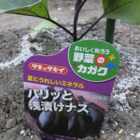 """夏野菜の植え付け """"ナス編"""""""