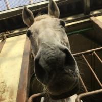 馬の仕事につくために アニベジ奮闘記 エピソード234