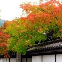 南禅寺天授庵 紅葉開始です。