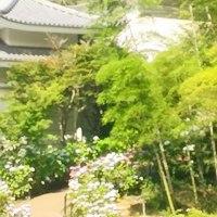 あじさい寺に行ってきました。