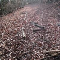 小山周辺の林道探索