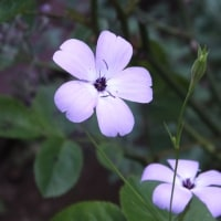 お気に入りの小さなお花