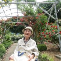 中野市一本木公園 バラ祭りへ第2弾