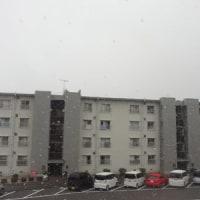 わ~い(^o^)/ 雪が降ってきた!