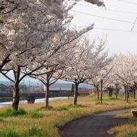 桜撮影 第2弾