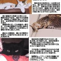 猫たちとの暮らし