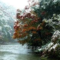 11月に雪景色
