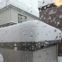 積雪65Cm ちょっと
