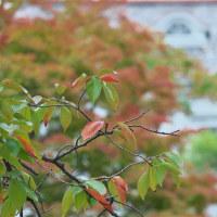 色づき始め:岡山県総合グラウンド