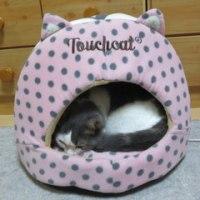 ミュウト君、猫耳ベッドに入れました~~(=^・ω・^)ノ☆
