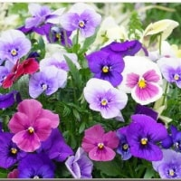 裏庭の花が満開