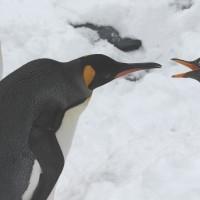 ペンギンの口喧嘩