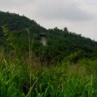 雨のため猫散歩は休み・午後4時前から里山