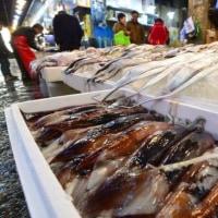 韓国政府 イカ市場価格安定のため政府備蓄枠で買い上げ 市場へ管理供給