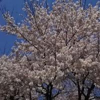 やっときた春