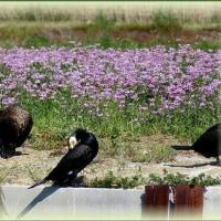 ベッカムヘアーの可愛い鳥がいました