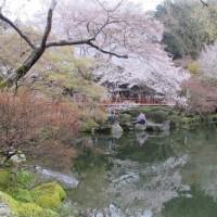 醍醐寺の逆さ桜