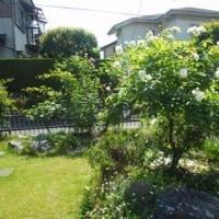 5月20日の庭