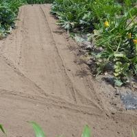 キャベツとレタスを植える場所