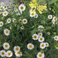 クリニックの後のお楽しみと花