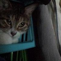 うちの猫だよ!