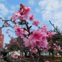 大寒から立春
