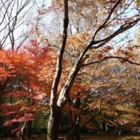 森林公園の紅葉