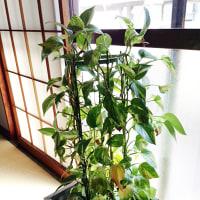 会社の植物